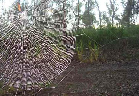 spiderweb_450w